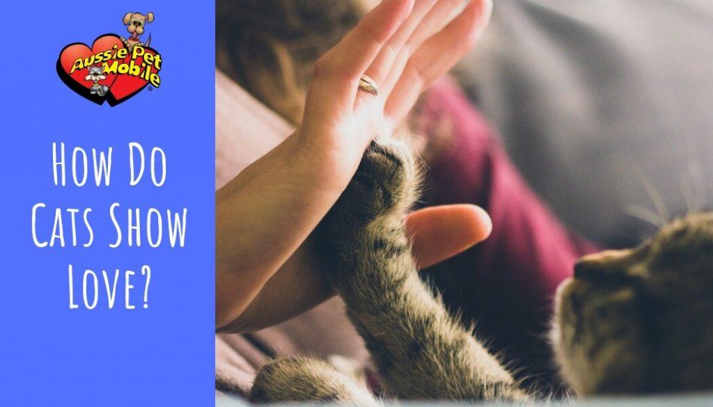 How Do Cats Show Love? Feb 2021