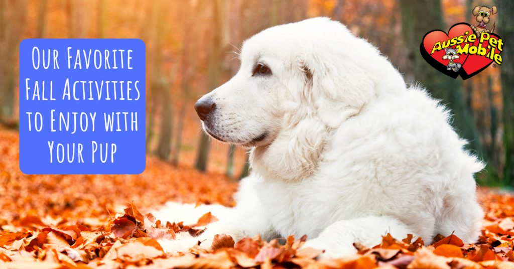 Our Favorite Fall Activities To Enjoy With Your Pup