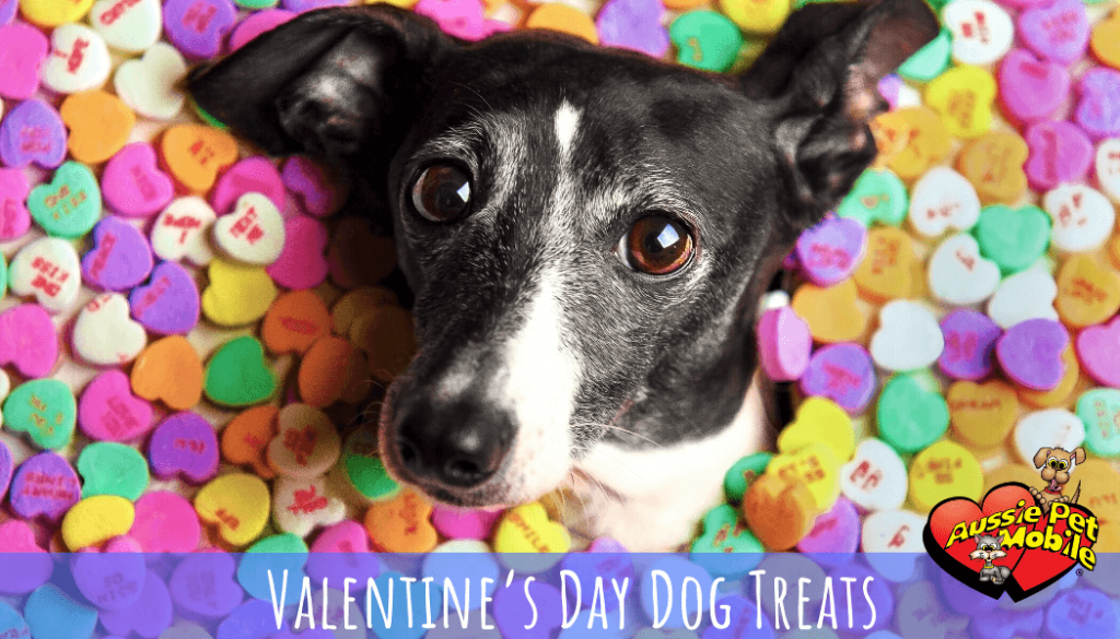 Valentine's Day Dog Treats 2020