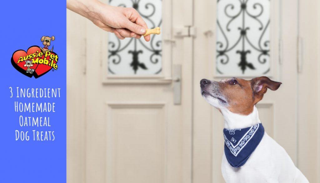 3 Ingredient Homemade Oatmeal Dog Treats