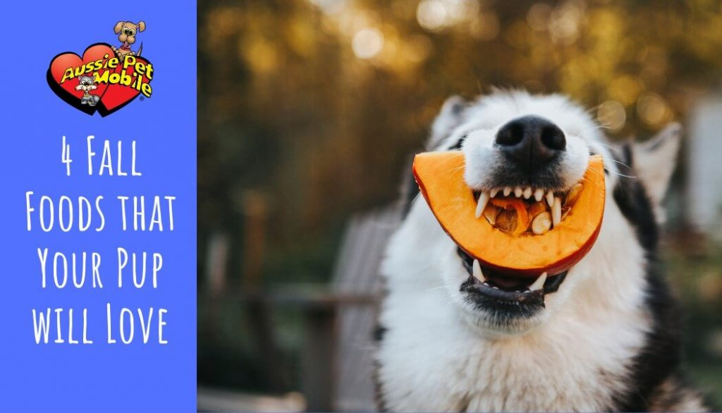 4 Fall Foods that Your Pup will Love
