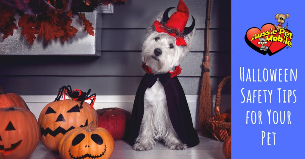 Halloween Safety Tips For Your Pet
