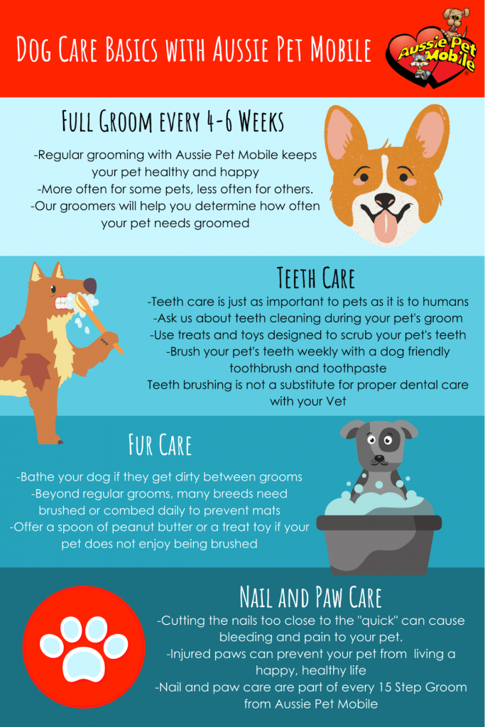 Dog Care Basics With Aussie Pet Mobile-Aug-2020