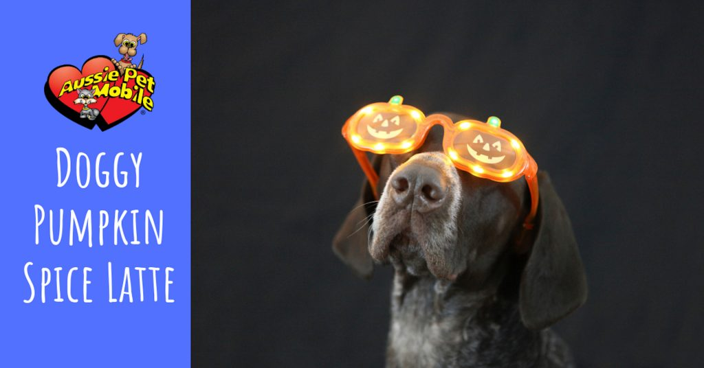 Doggy Pumpkin Spice Latte