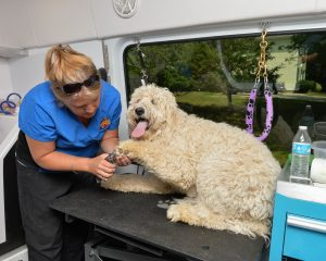 Aussie pet mobile bluegrass mobile grooming for cats dogs we pride ourselves on our innovative mobile design heated hydro bath and our aussie pet mobile grooming service which assures that your pet has a complete solutioingenieria Choice Image