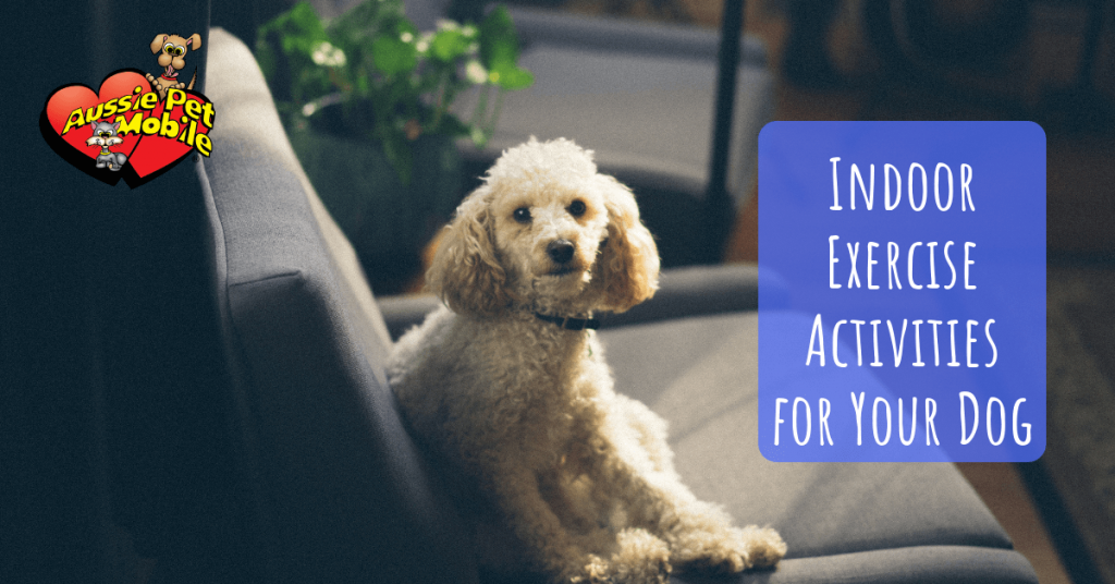 Indoor Exercise Activities for Your Dog