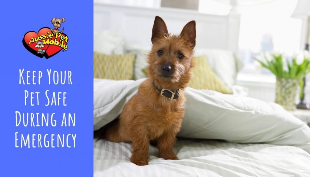 Keep Your Pet Safe During an Emergency Feb 2021