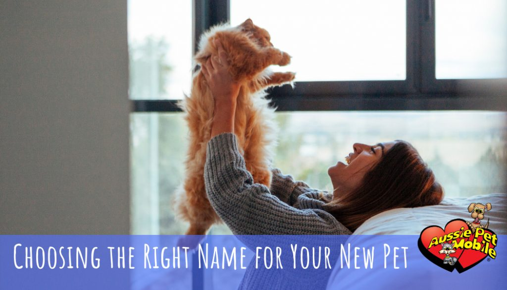 choosing the right name for your new pet