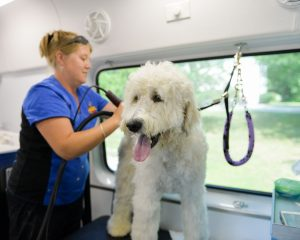 Aussie pet mobile greater memphis west tn mobile grooming for stock gallery 13 stock gallery 10 solutioingenieria Choice Image