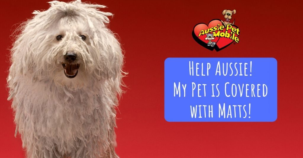 Help Aussie! My Pet is Covered with Matts!
