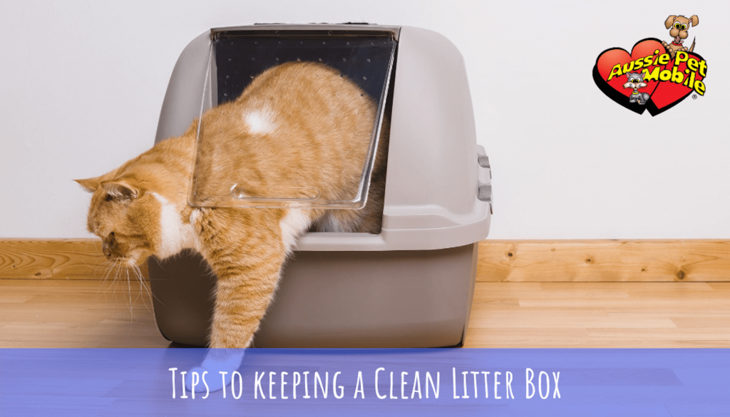 Tips to Avoid Litter Box Problems with Your Cat-Aug-2020