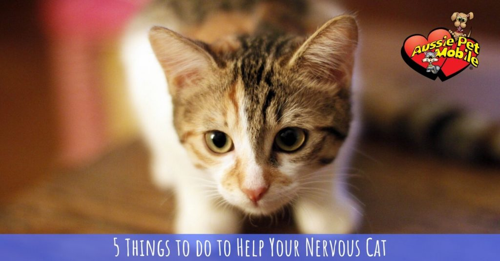 5 Things to do to Help Your Nervous Cat