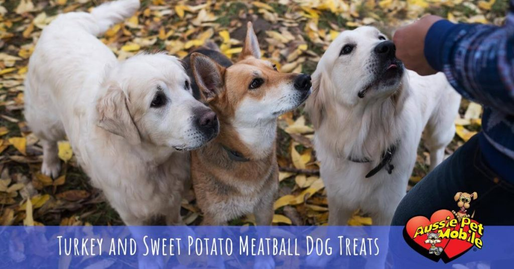 Turkey And Sweet Potato Meatball Dog Treats