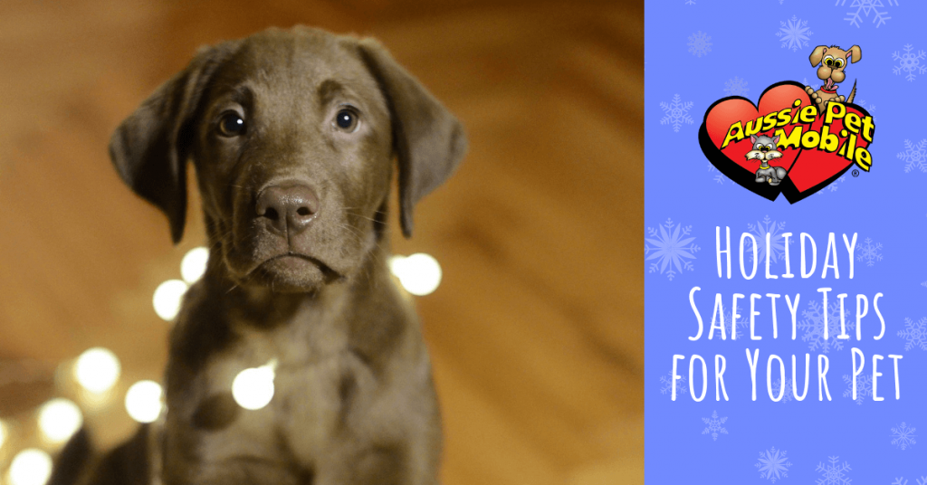 Holiday Safety Tips for Your Pet