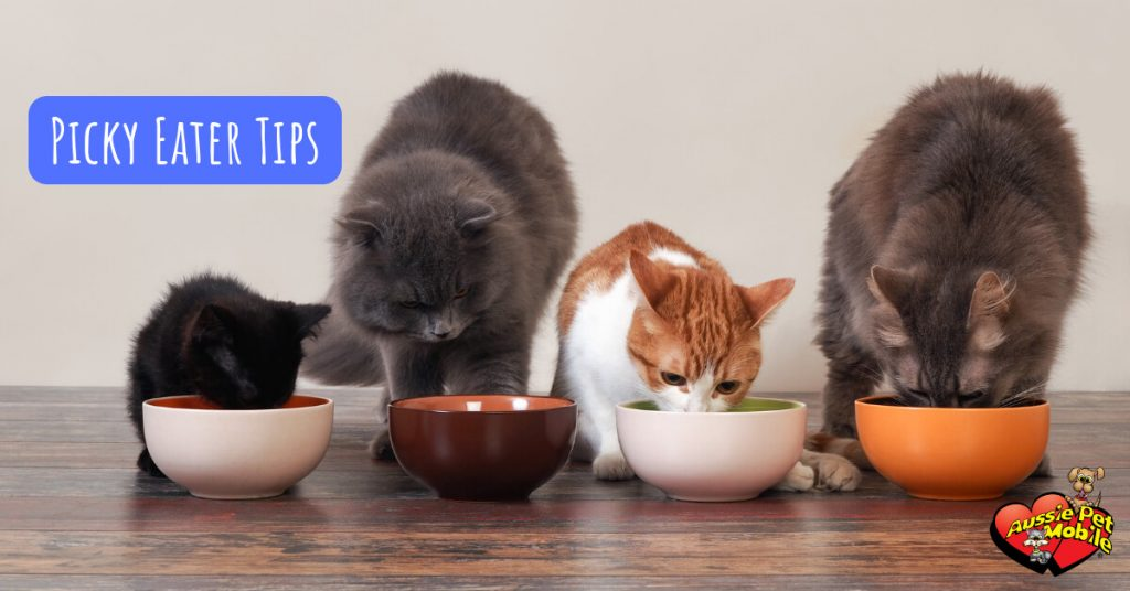 Picky Eater Tips