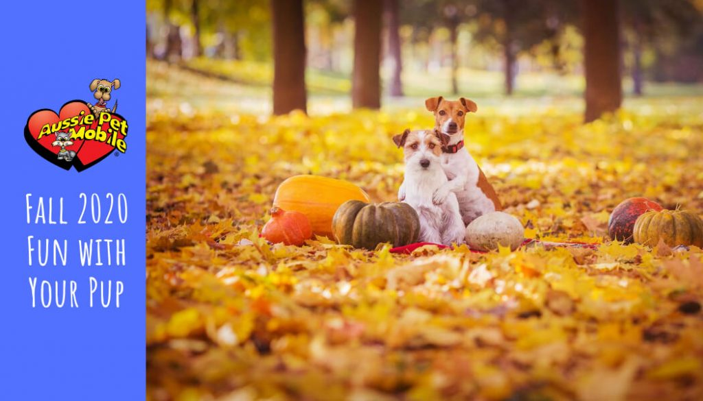 Fall 2020 Fun with Your Pup - Sept 2020
