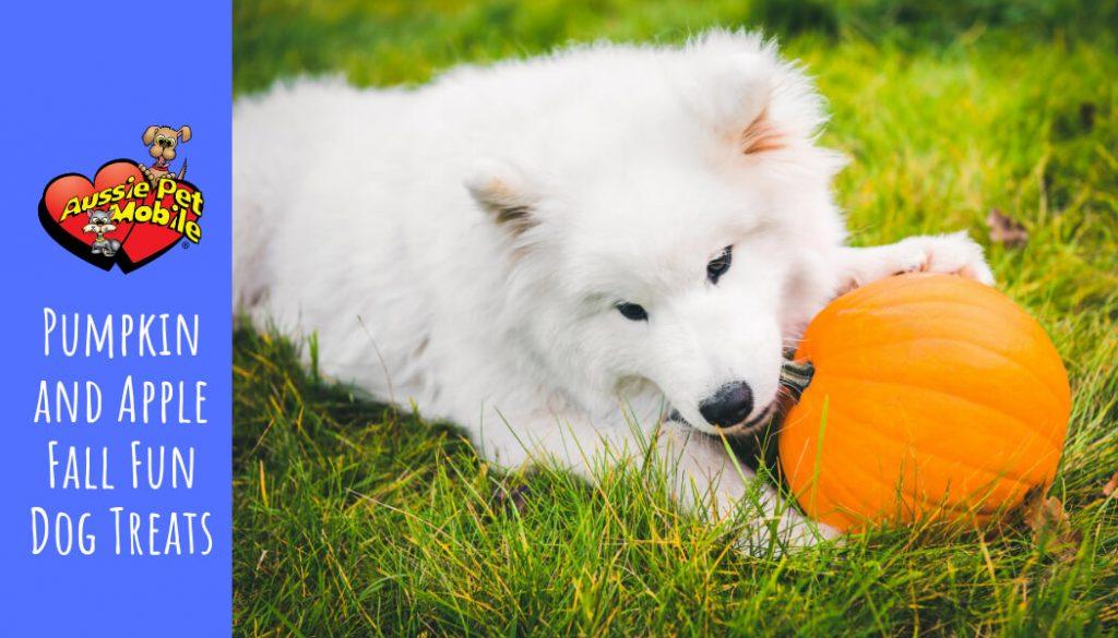 Pumpkin and Apple Fall Fun Dog Treats - Sept 2020