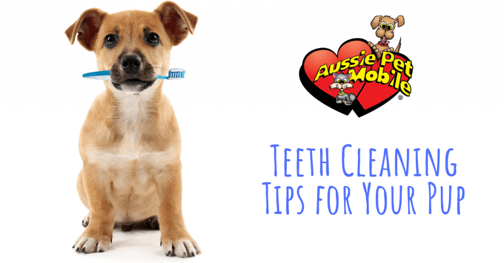 Teeth Cleaning Tips For Your Pup