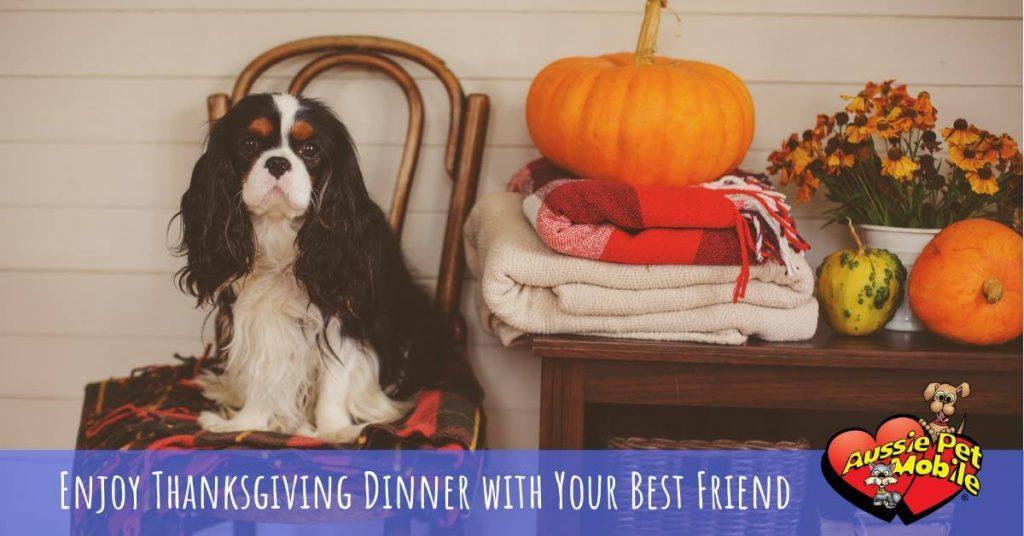 Enjoy Thanksgiving Dinner With Your Best Friend