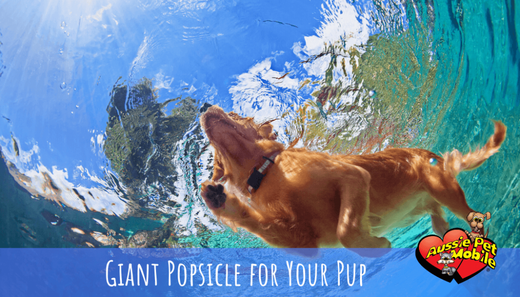Giant Popsicle for Your Pup