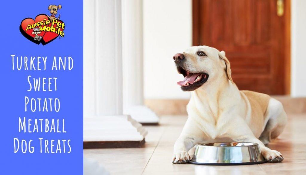 Turkey and Sweet Potato Meatball Dog Treats-Nov-2020