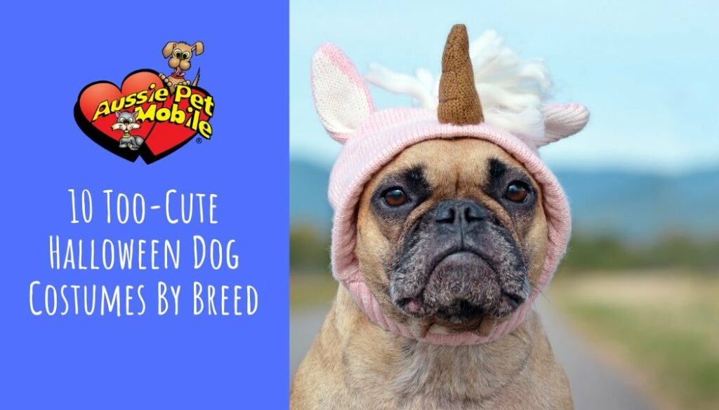 10 Too-Cute Halloween Dog Costumes By Breed Oct 2021