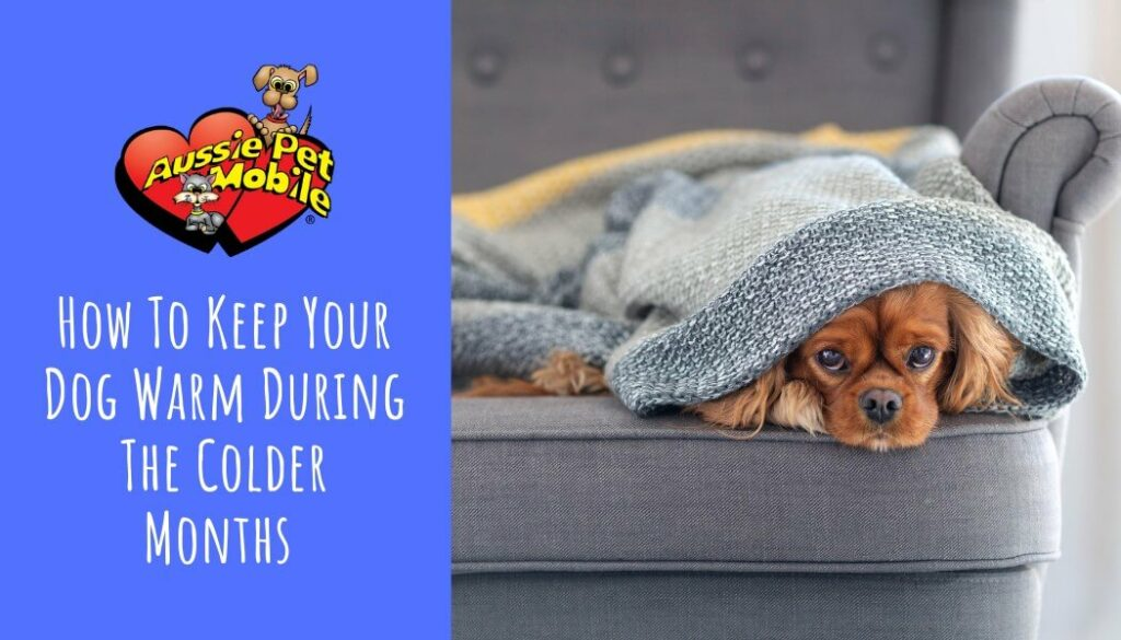 How To Keep Your Dog Warm During The Colder Months Oct 2021