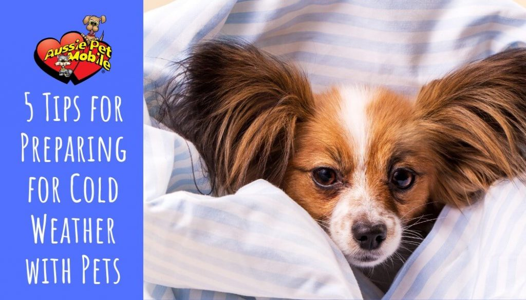 5 Tips for Preparing for Cold Weather with Pets-Nov-2020